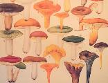 Shrooms_1449089521_crop_156x120