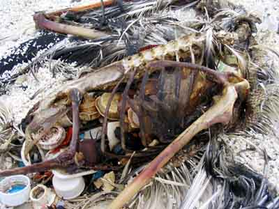 Trashed: Across the Pacific Ocean, Plastics, Plastics, Everywhere CHARLES MOORE / Natural History v.112, n.9, Nov03