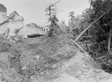 The Columbia Glacier surged (advanced rapidly) earlier this century, part of it flowing into a forest. The push moraine in this photograph from 1914 shows Columbia Glacier literally pushing up trees and dirt as it advanced. (Photo courtesy of D.K. Handy, archived at the World Data Center for Glaciology, Boulder, CO.)